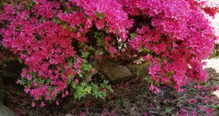 Flores para mi madre qurida